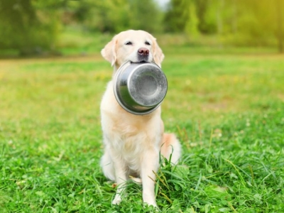 Animal Health/Vets